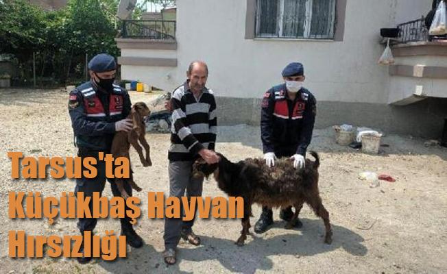 Tarsus'ta Küçükbaş Hayvan Hırsızlığı
