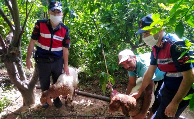 Tarsus'ta Kümes Hayvanı Hırsızlığı
