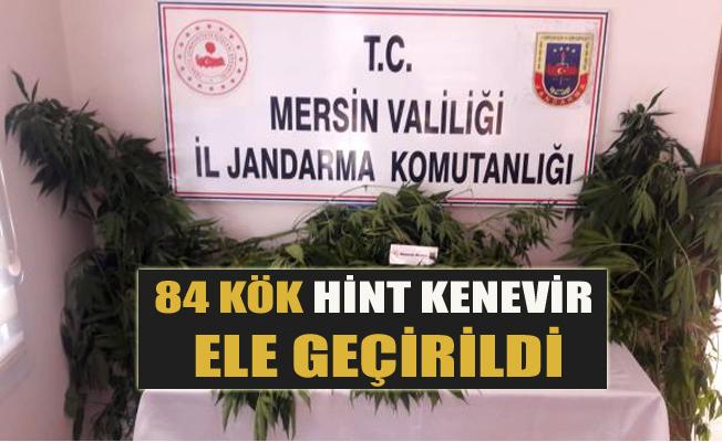 Tarsus'ta 84 Kök Hint Kenevir Ele Geçirildi